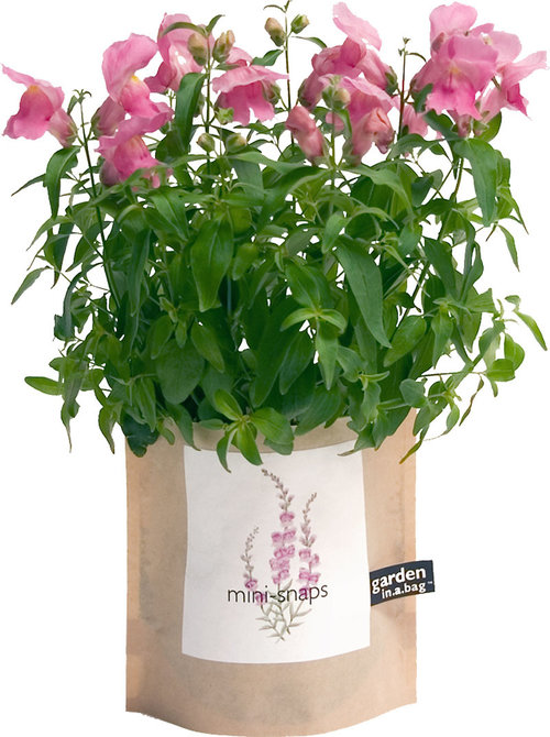snapdragons garden in a bag flowers gift — MUSEUM OUTLETS