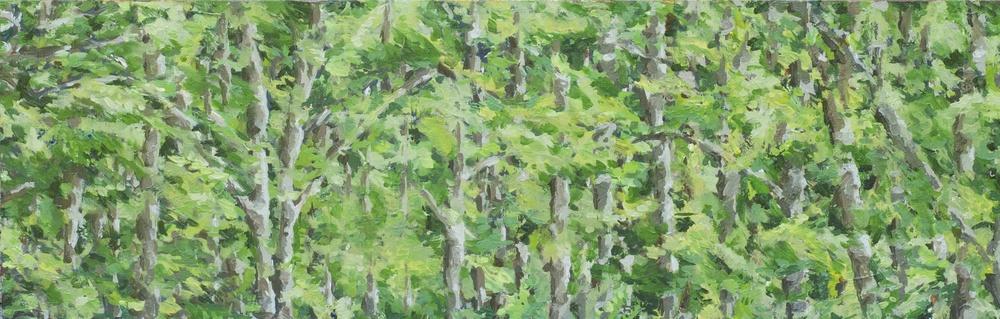 Soft Woods