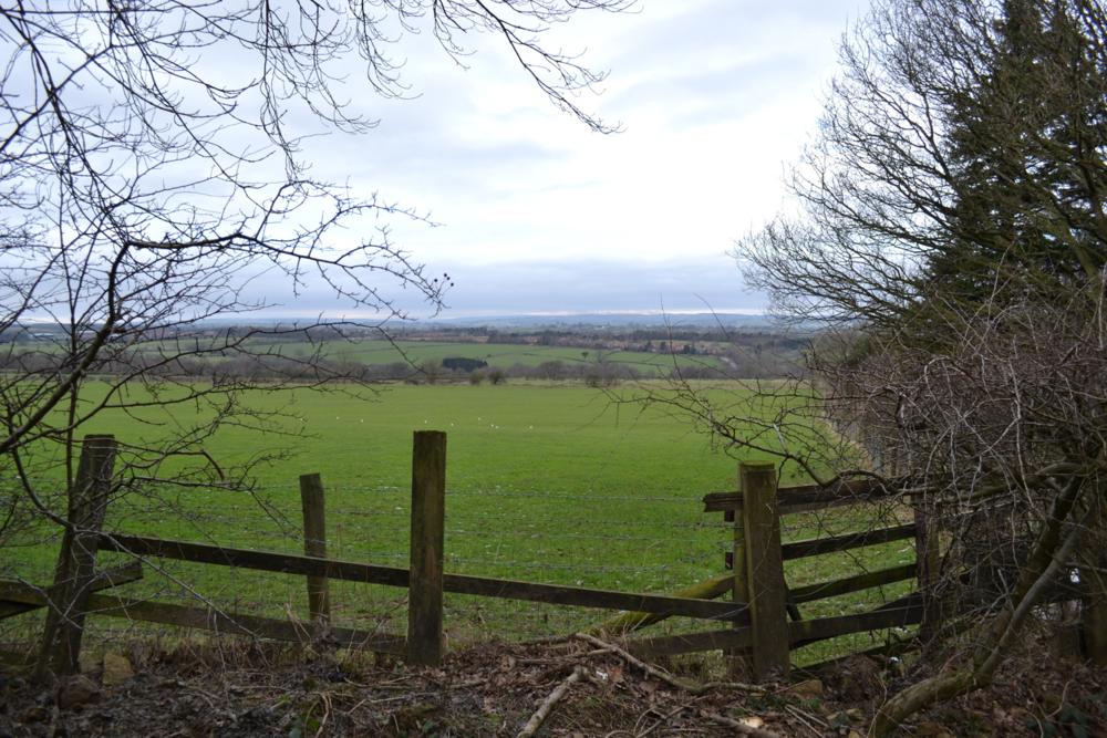 Pine Woods View. 2015