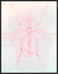 Louis Bourgeois,  Mosquito,  1999, Drypoint on Paper
