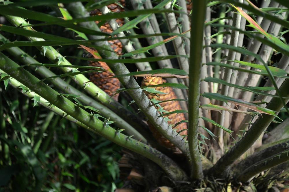 botanical garden plant.JPG