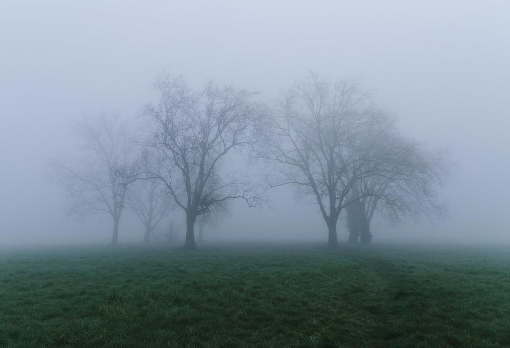 Wanstead Flat Fog 2.jpg
