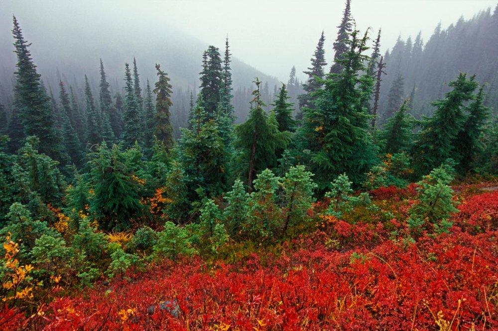 Hurricane Ridge   Photo Credit:  National Geographic