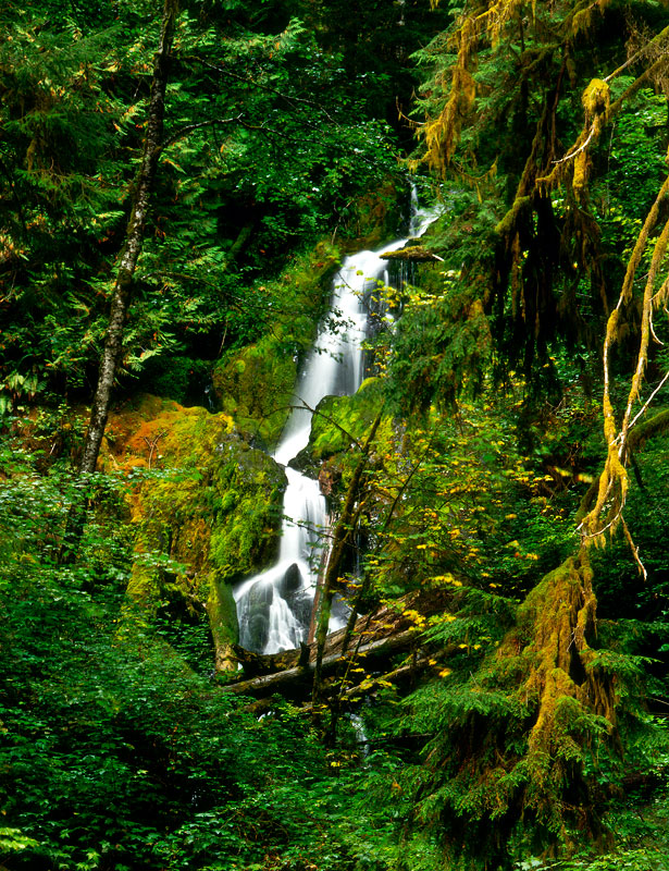 Photo Credit:  Olympic Waterfall Trail/Lani Doely Photography