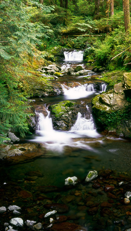 Olympic Waterfall Trail/Lani Doely Photography