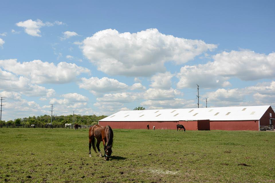 The Devoted Barn