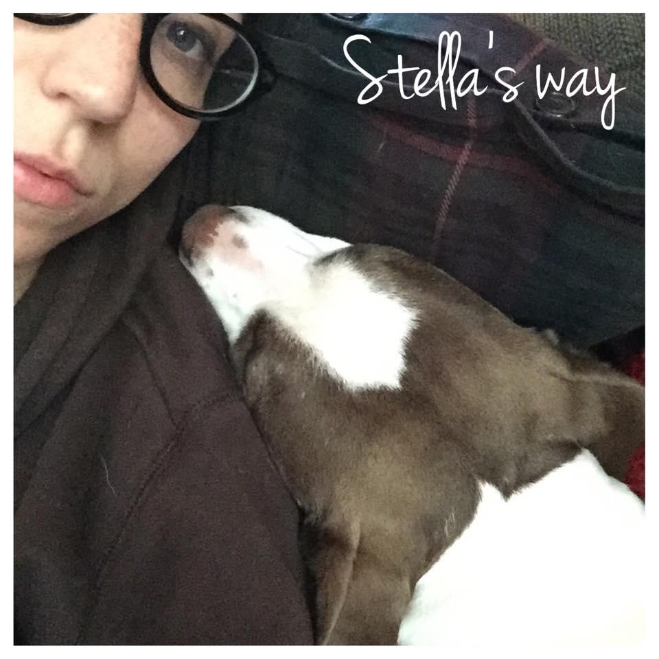 Stella adoptable.jpg