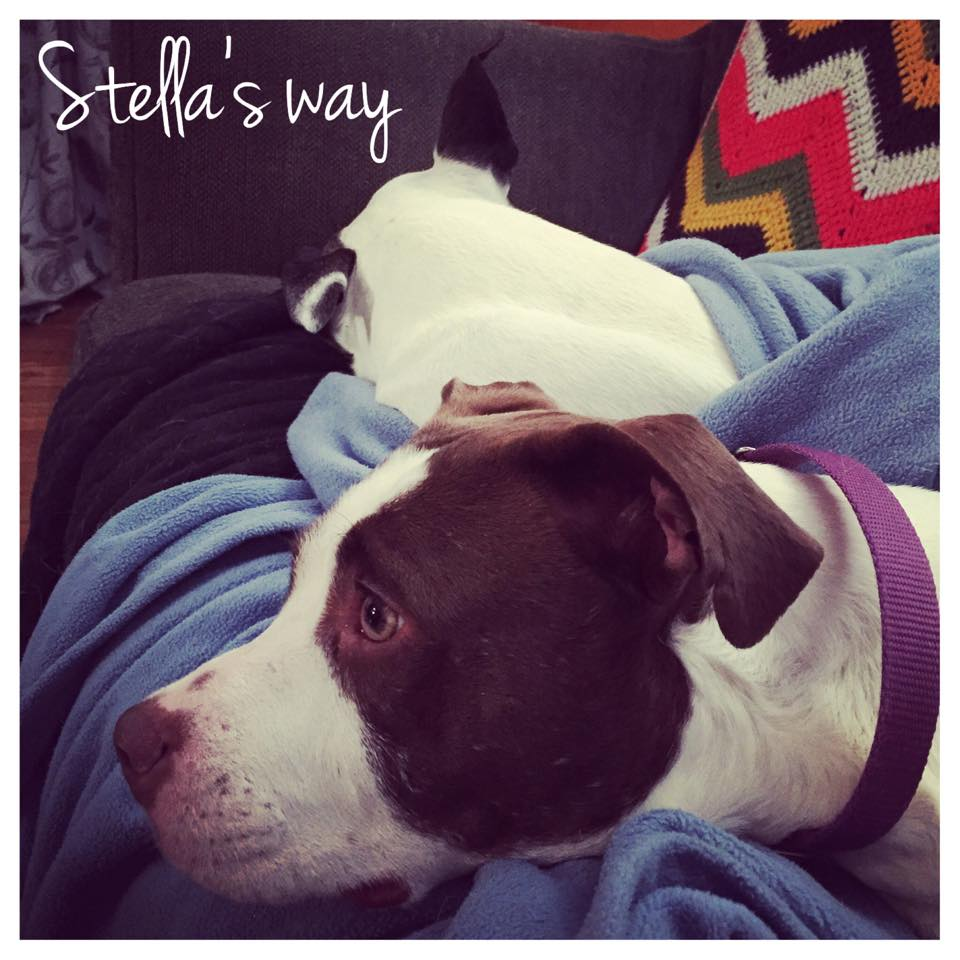 Stella adoptable 3.jpg