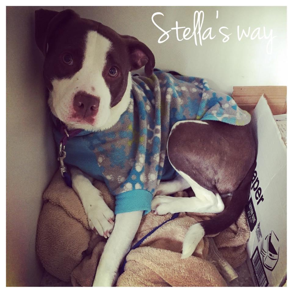 Stella adoptable 2.jpg