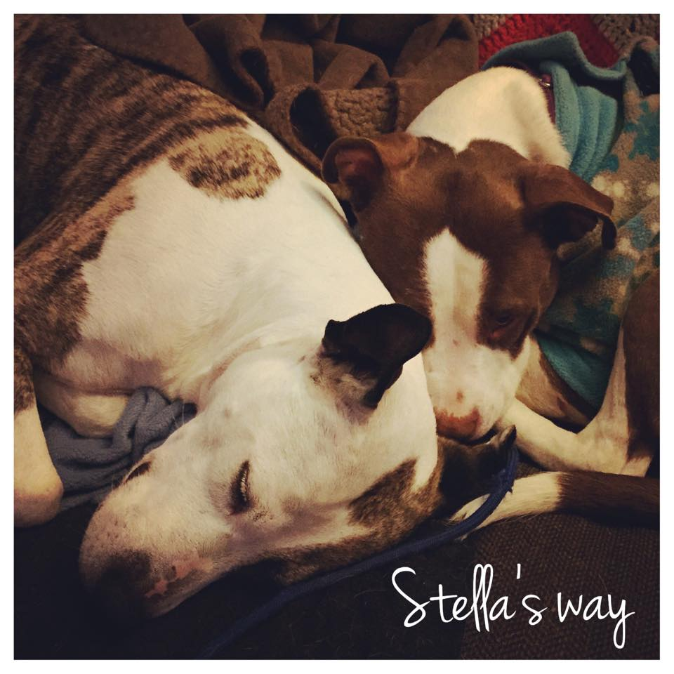 Stella adoptable 6.jpg