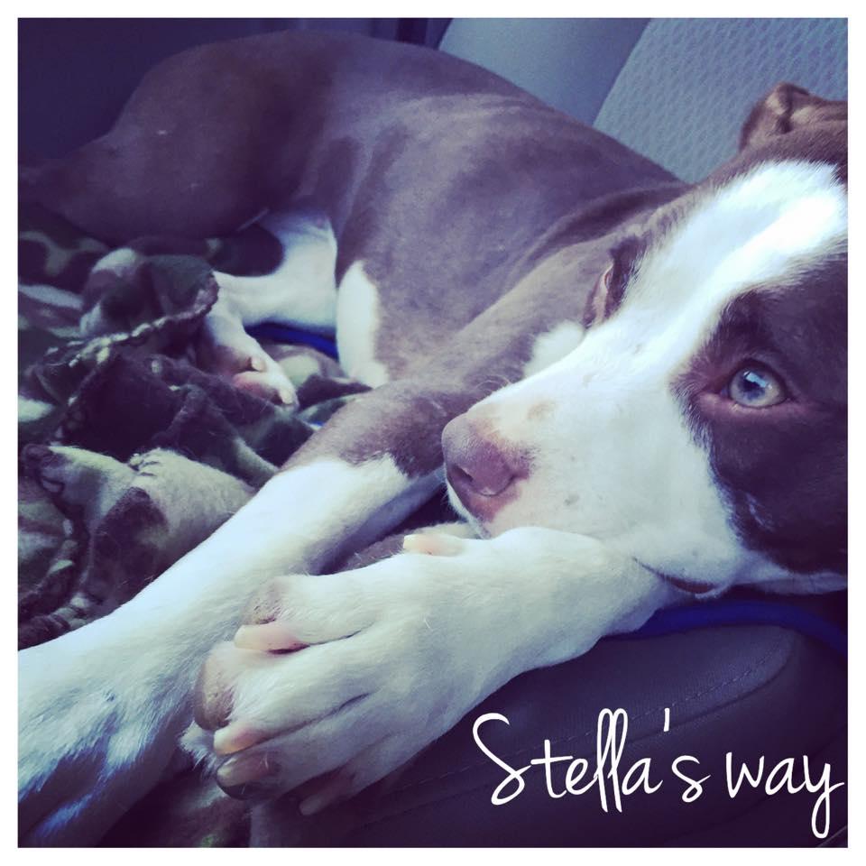 Stella adoptable 5.jpg