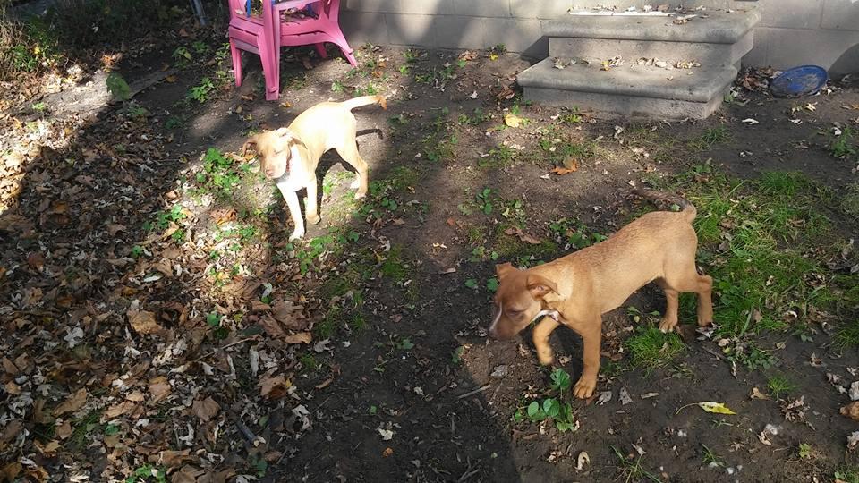 P puppies 8.jpg