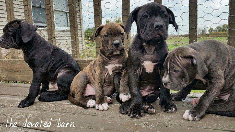 Cassie's pups.jpg