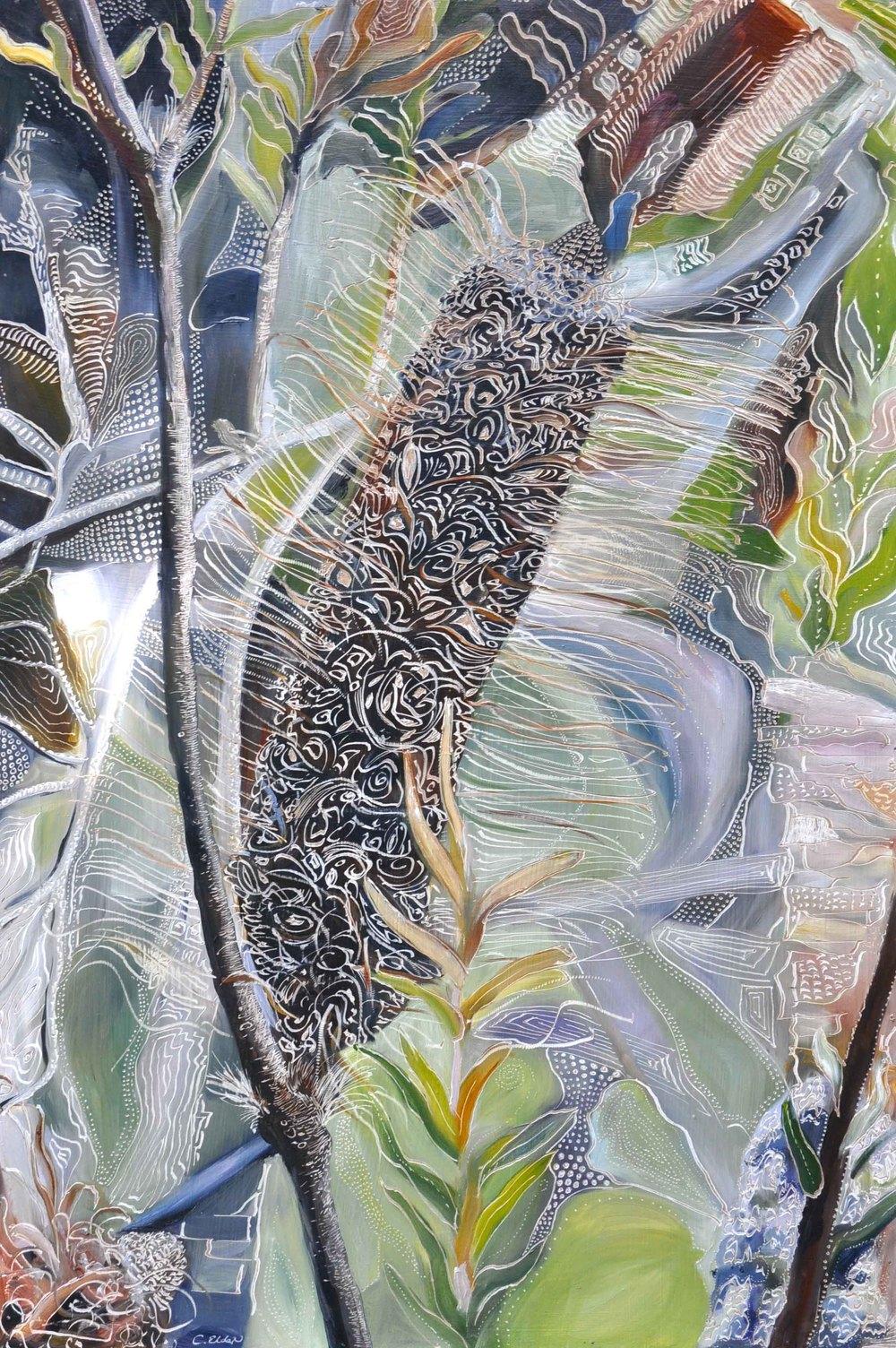 Title: Banksia ericifolia - Passing