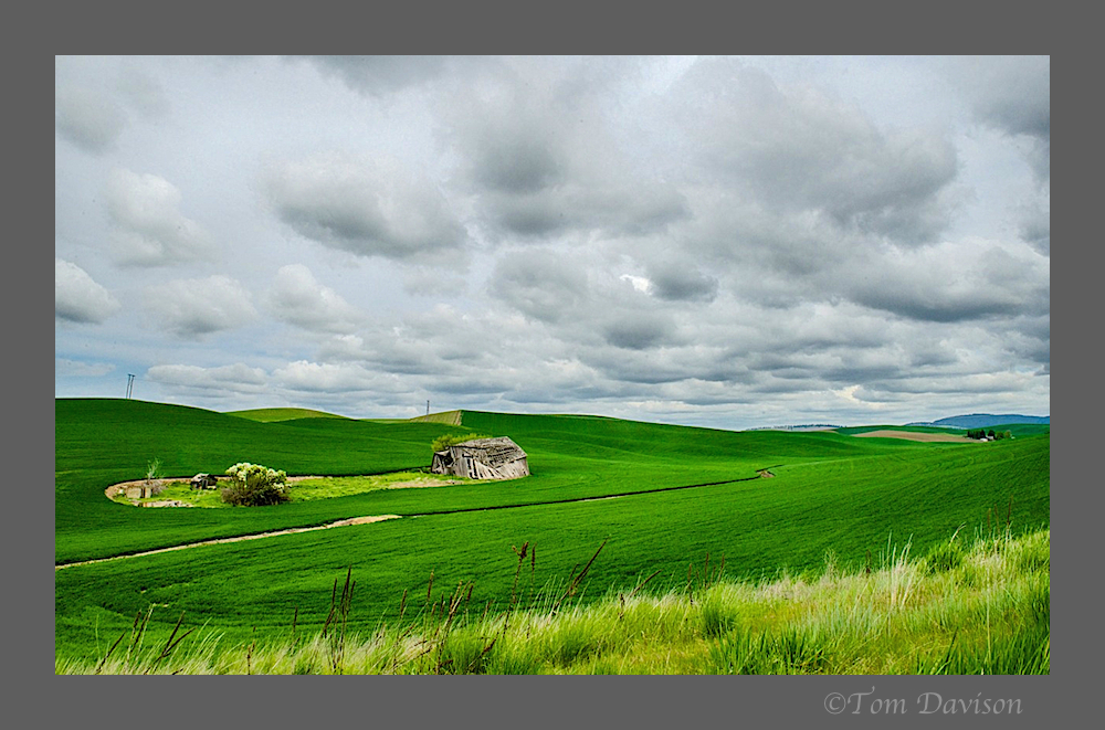 Day Two in Palouse 21.jpg