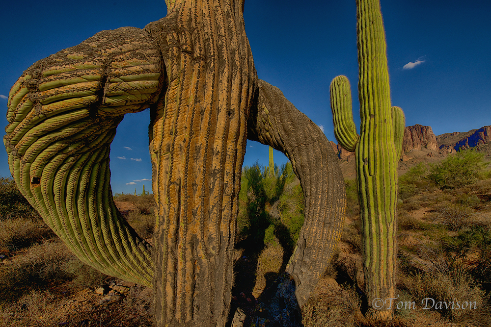 TD Superstition Mountain Range 4.jpg