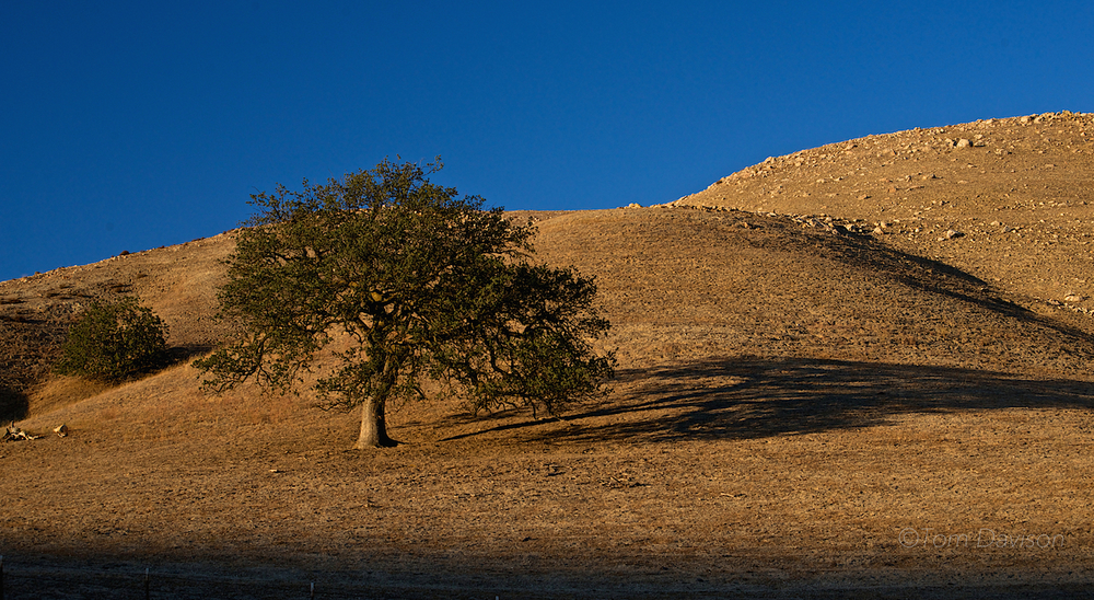 One of Tom's signature compositions.  Lonely tree, shadow, Golden Hour light. . .