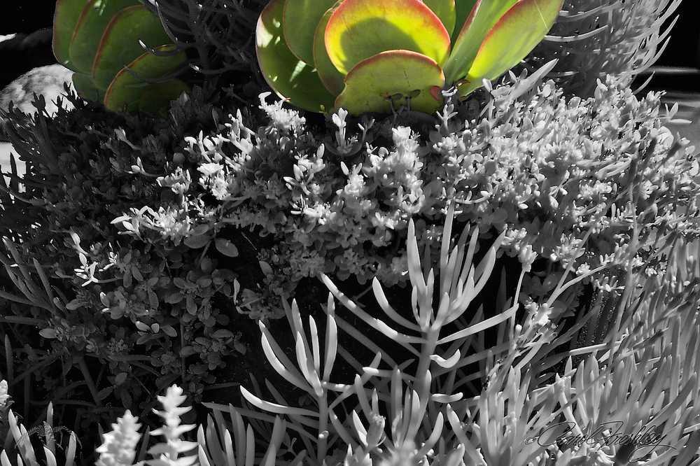 Just had to!  Used layers in Photoshop to erase top infrared photo to reveal the color photo underneath.  Somebody has to do the Photoshop when Tom is gone.  LOL
