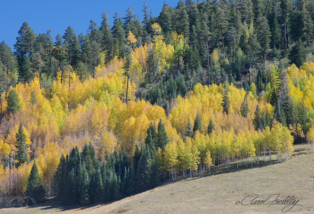 Just like David described, aspens around broad meadows!