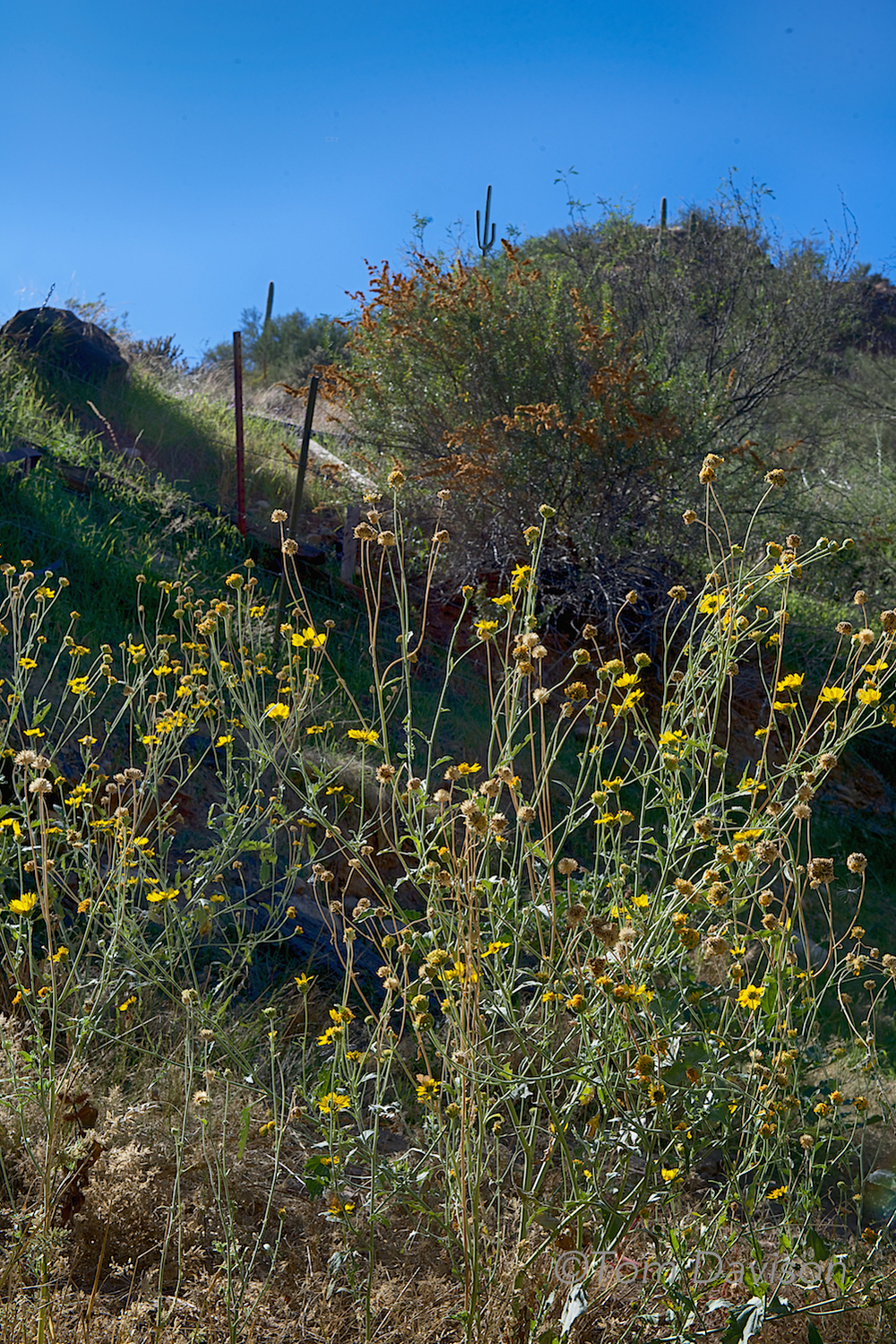 The train tracks are just above the yellow flowers and below the cactus. Imagine our surprise when that big thing went by!! Yikes!!