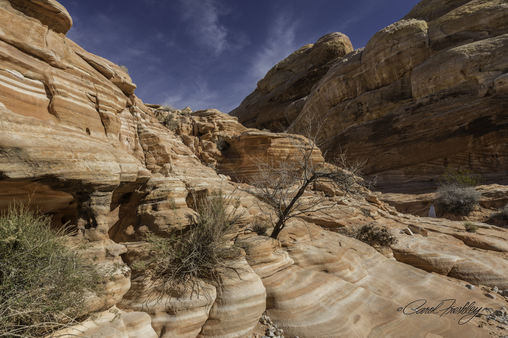 Valley of Fire-39-1.jpg
