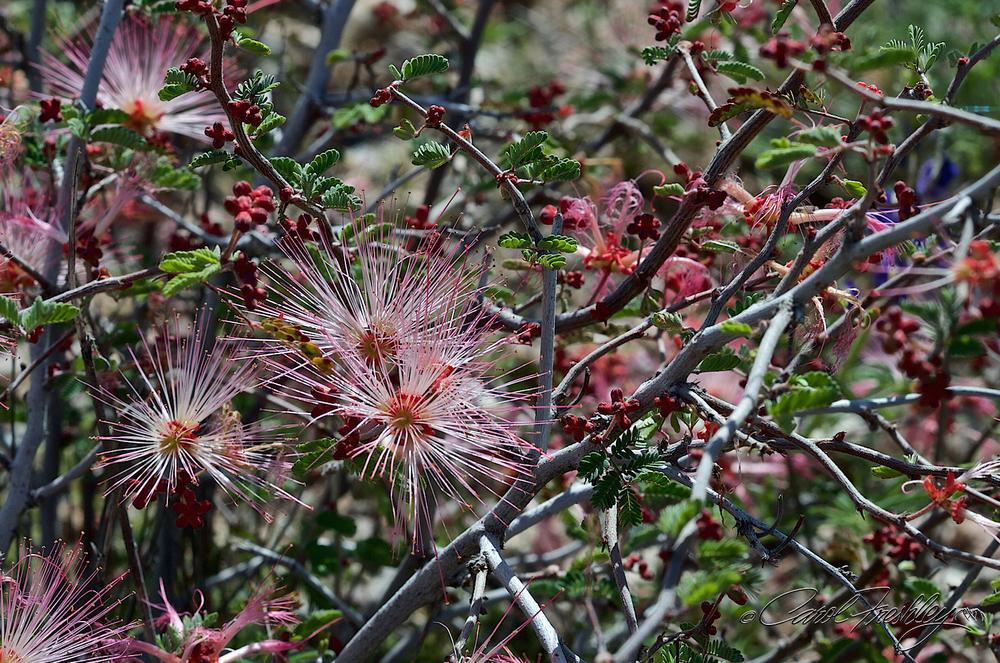 Wildflowers to Globe 21.jpg