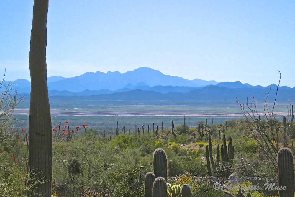 Gorgeous view of the Sonoran Desert from the trail.