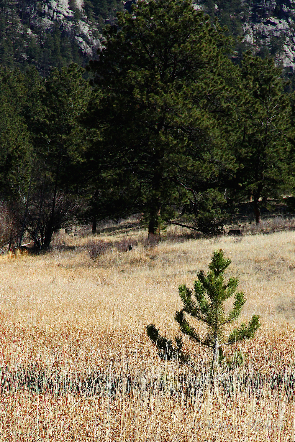 There are pine trees, lots of grass and a few trees that I could not identify that were still waiting for their spring leaves.