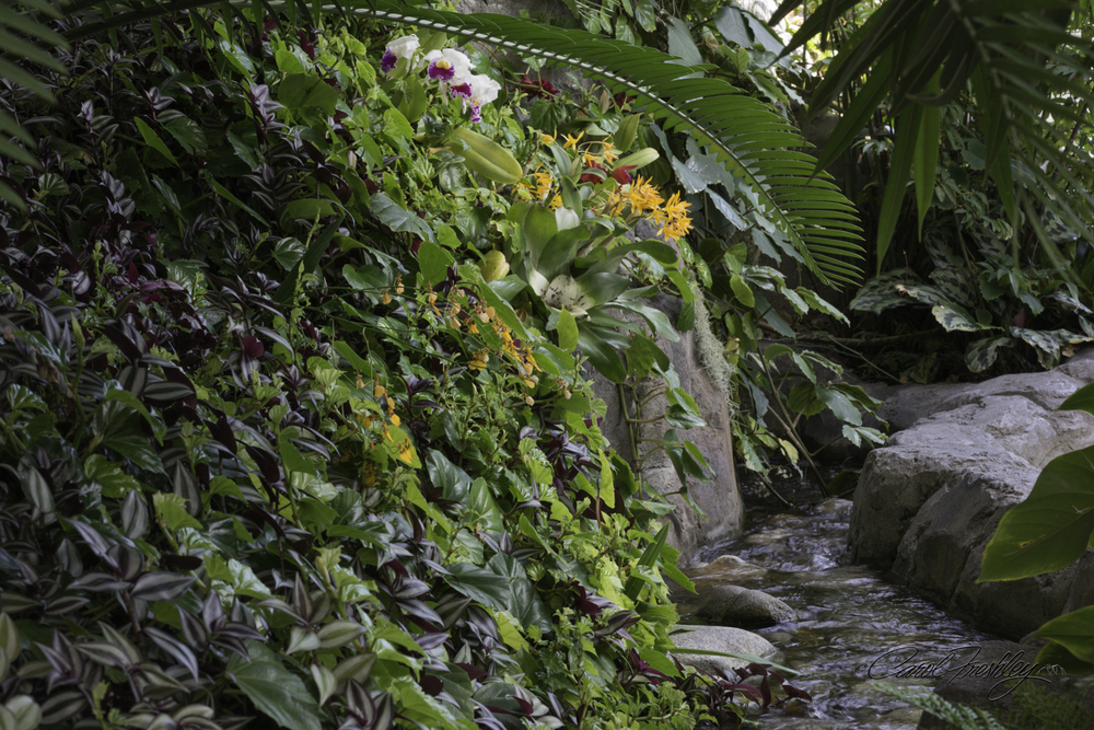 Just look at this luscious little creek in the orchid area.