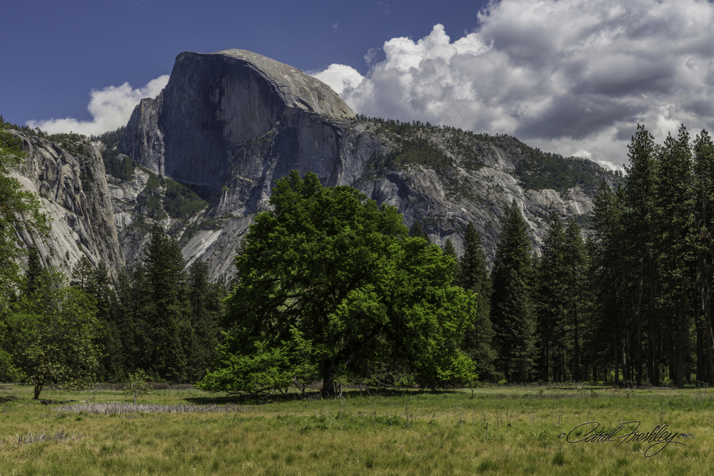 Half Dome from Cook's Meadow.