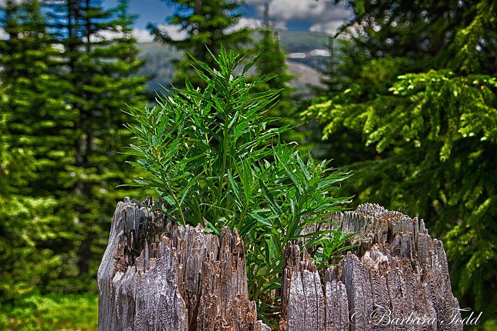 23-Shrine Ridge hike-4.jpg