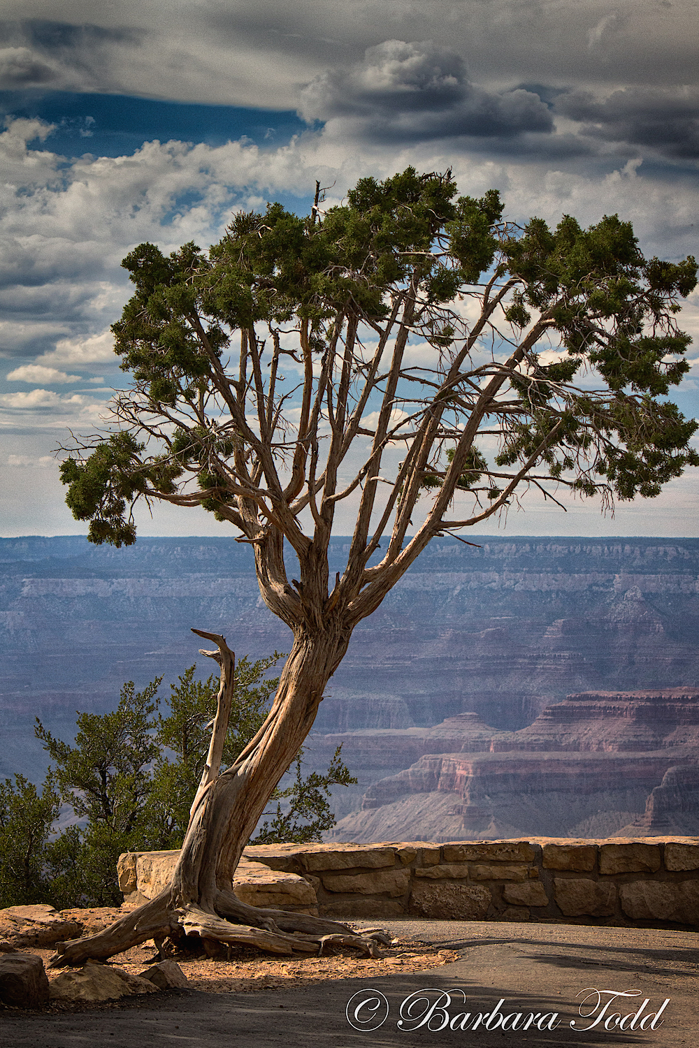 BT South Rim Again 9.jpg