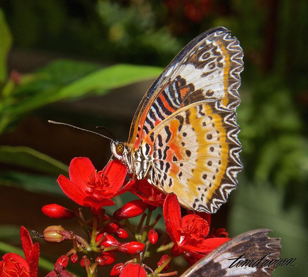 TD Butterfly Wonderland 104.jpg
