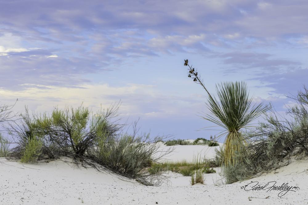 White Sands-1348.jpg