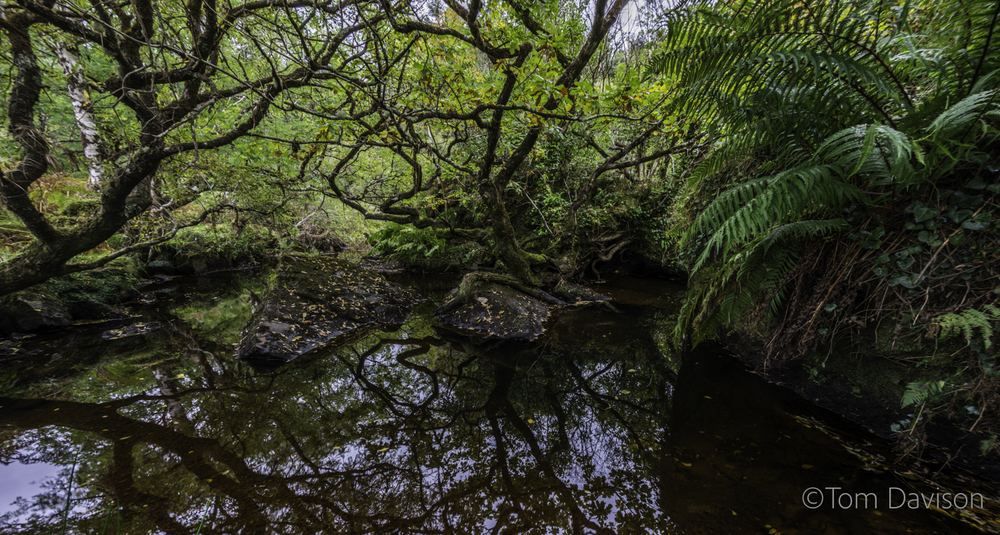 Fortunately it was dark enough to get some still water with a fisheye (does not handle filters well. The trade off was a much broader view that got in the ferns.