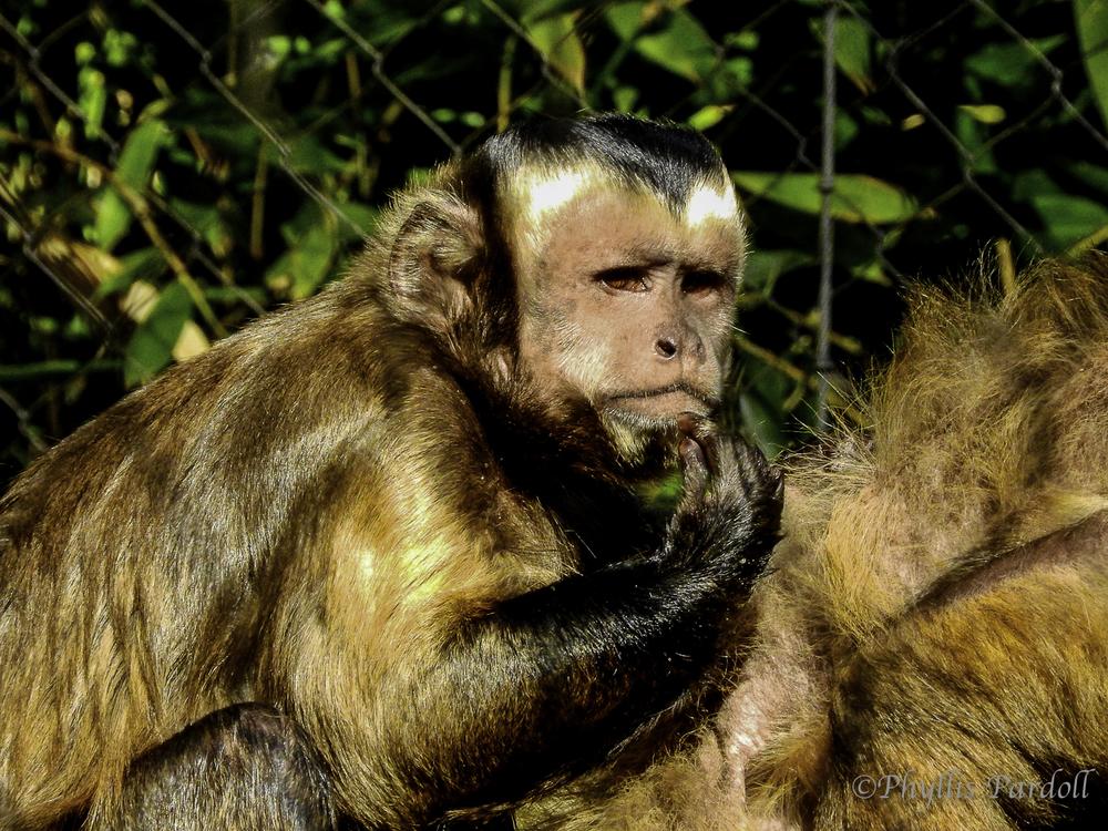 Monkeyv