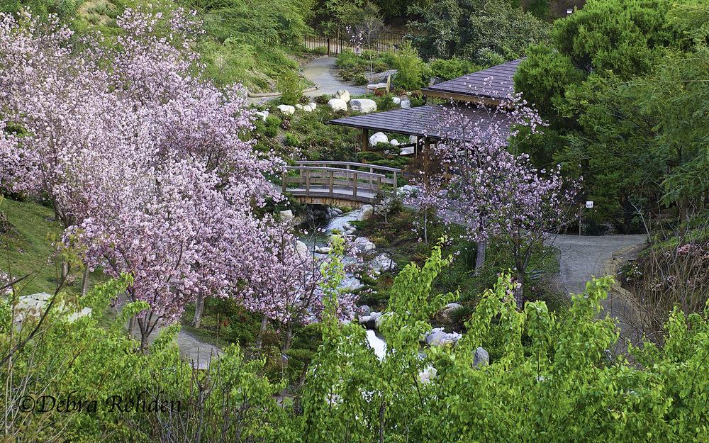 Japanese Garden at Balboa Park