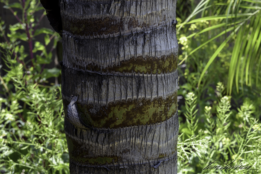 Palm trunk, used strategically to shade plants.