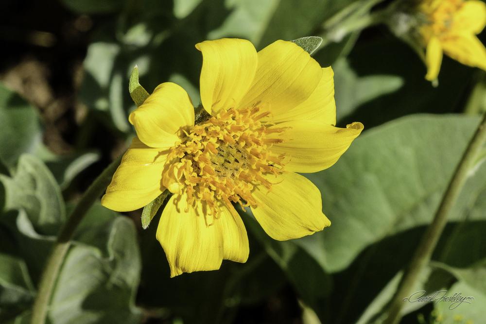 A pretty flower!