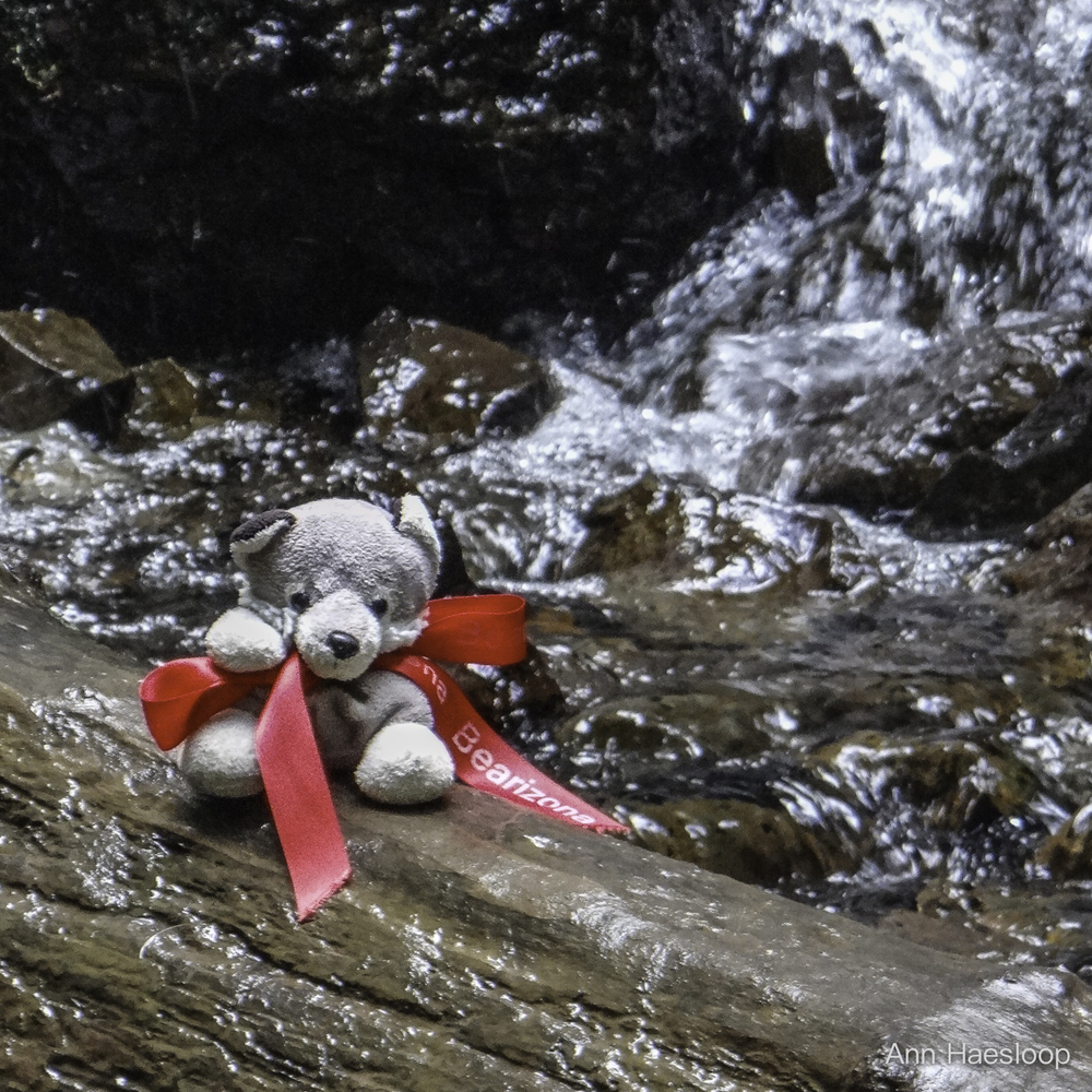 Yes, Lefty our mascot was with us all week.  Here, getting a bit wet at Fair Falls.