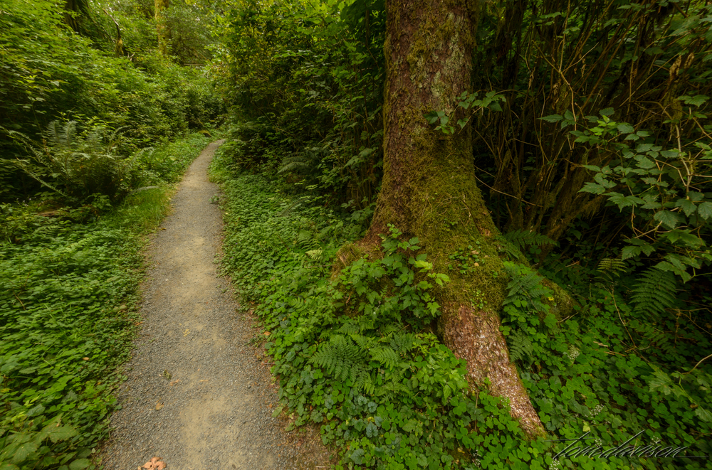 We followed one of the easier trails.  The signs at the trail head ask that we stay on the trail.  Easy, no bush-wacking tools in my camera bag!  The growth is so thick I could not imagine earlier peoples creating paths and then keeping them from being overgrown.
