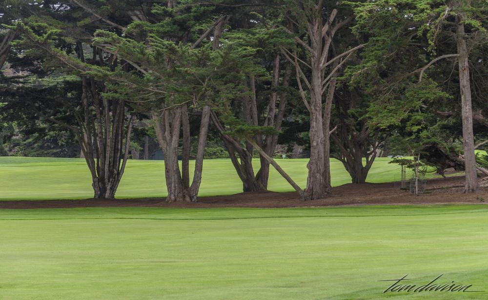 Adorning a golf course
