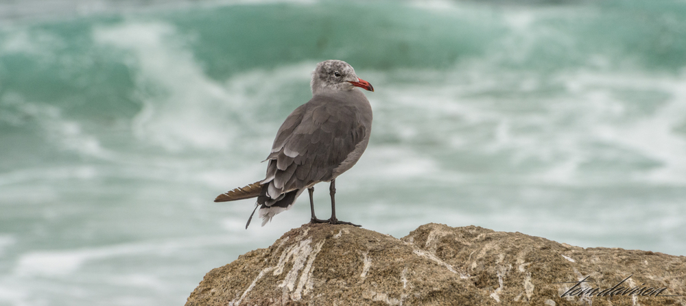 You have to get a photo of at least one sea gull while you are near waves.  It is a rule!!!  I am working on finding one I like.