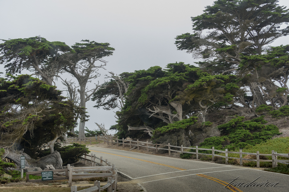 You could spend a full day just driving around in this area and taking photos of trees.