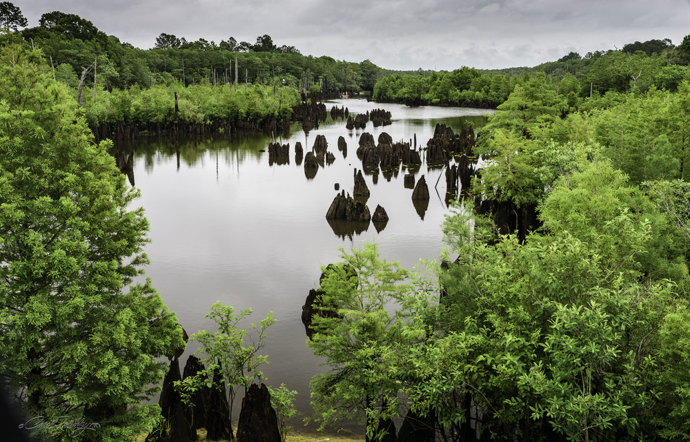 Dead Lake covers 6,700 acres (approximately 80 square miles) on the Chipola River near Wewahitchka, FL.