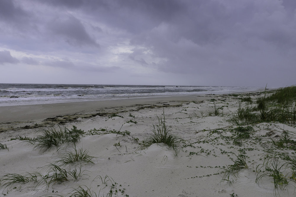 Finally, we drove to St. George's Island. Isolated and with good reason on this day. We were under a tornado, severe thunderstorm watch. It was very windy and cold. But, this would be an incredible photo opportunity in better light.
