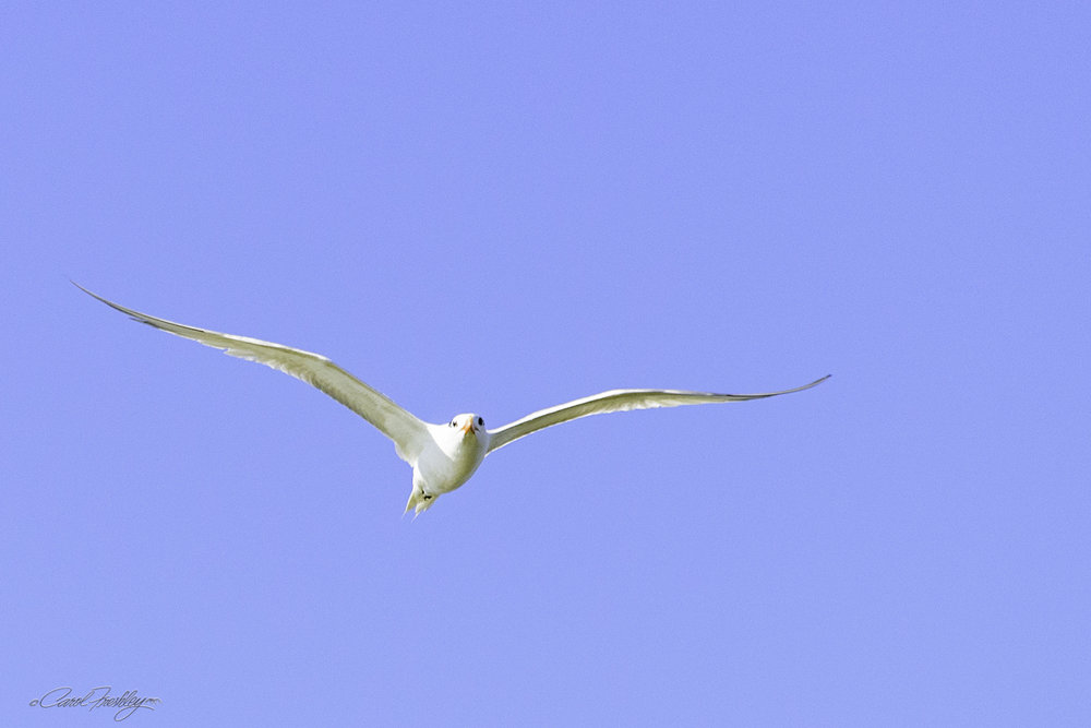 Yeah, one of my few birds in flight that actually turned out!