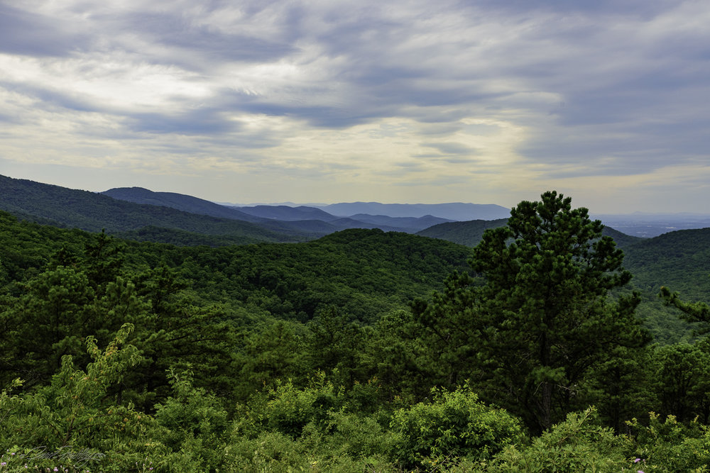 So why are these mountains called Blue Ridge Mountains?  Hmmmmm . . . .