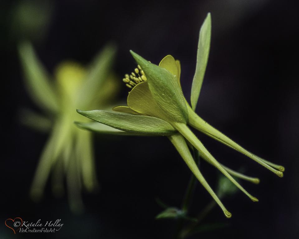 Some flowers deserve a double take. A rare flower deserves a triple take!!!