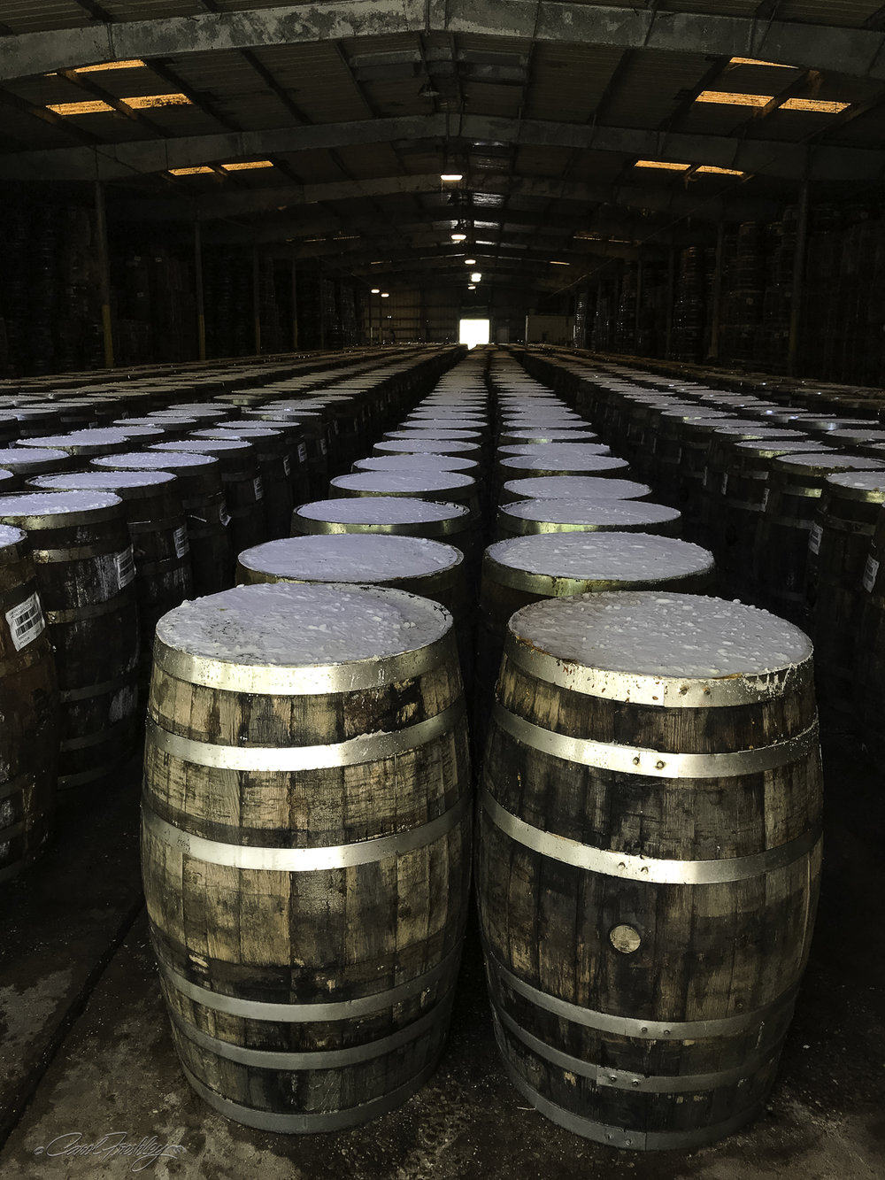 The white oak barrels are sealed and salt placed on top. The mash ferments in the barrels for three years.